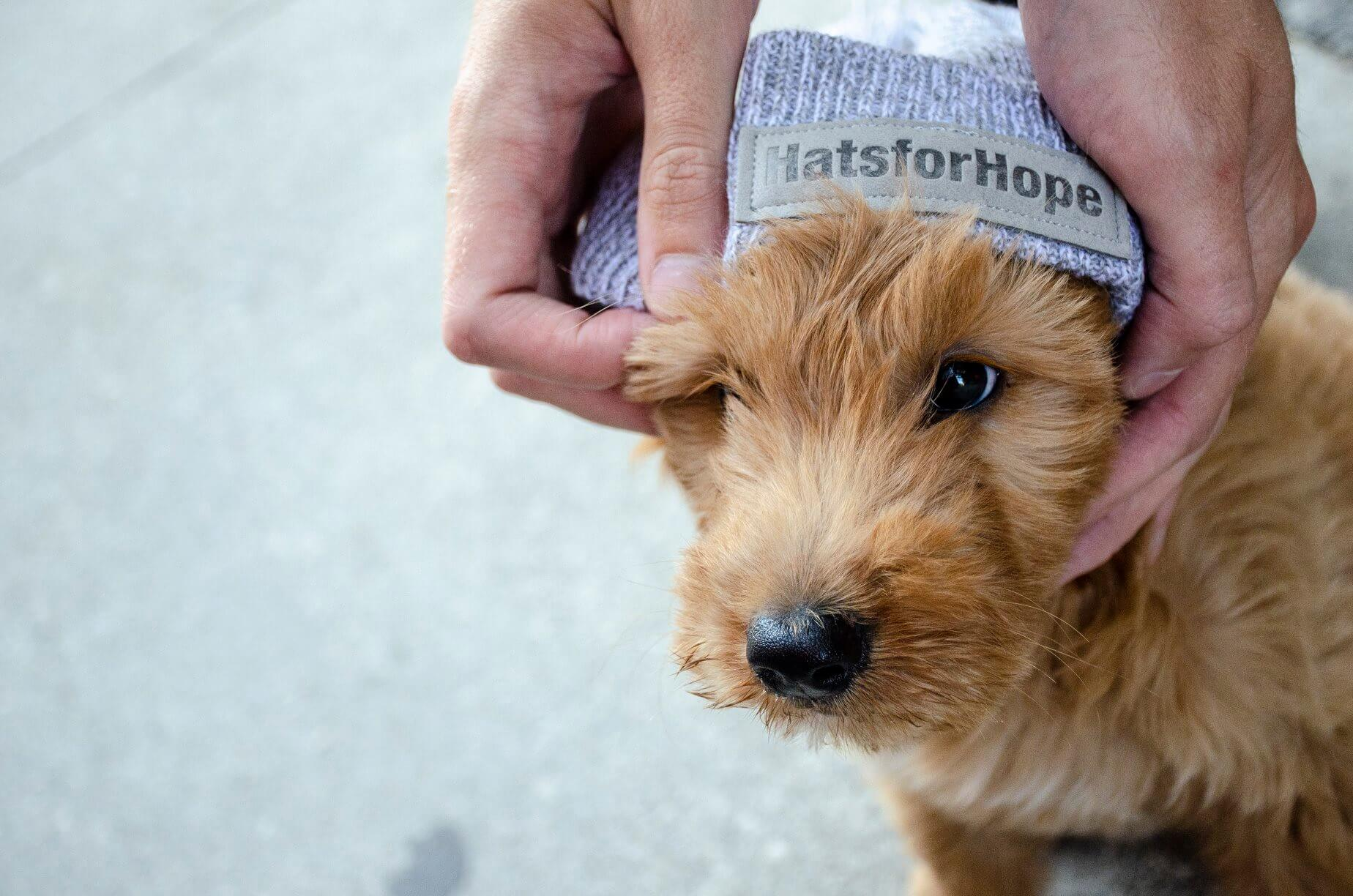 Cute dog wearing a Hats for Hope toque.